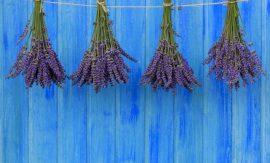 11 природни аромата, които неочаквано променят емоциите ви
