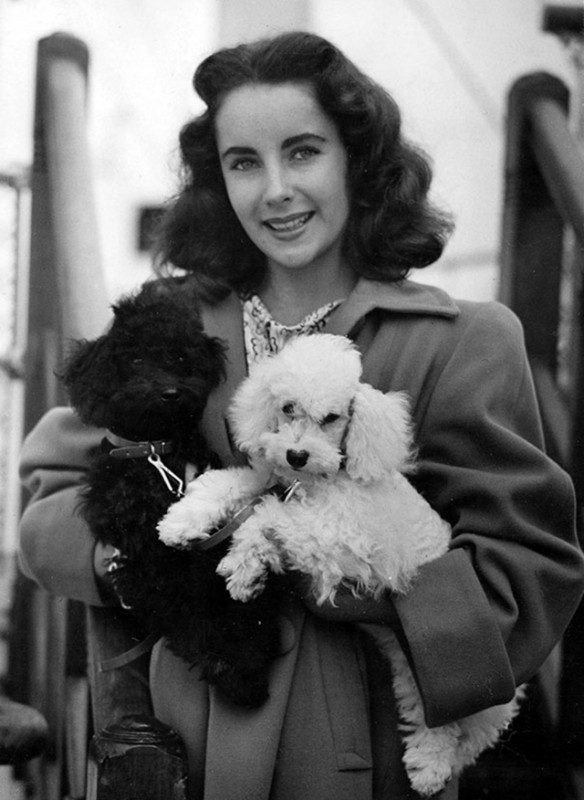 Elizabeth Taylor and her dogs