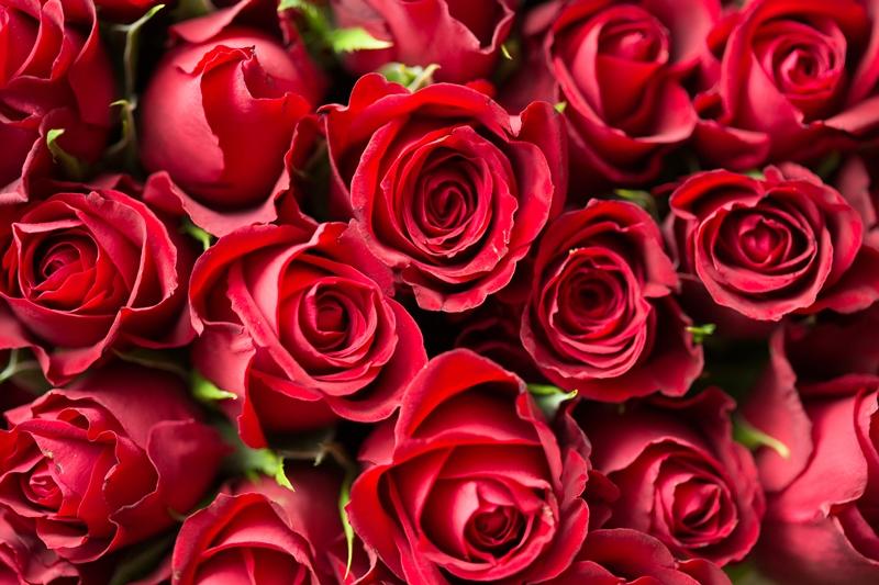 picjumbo.com_HNCK0560