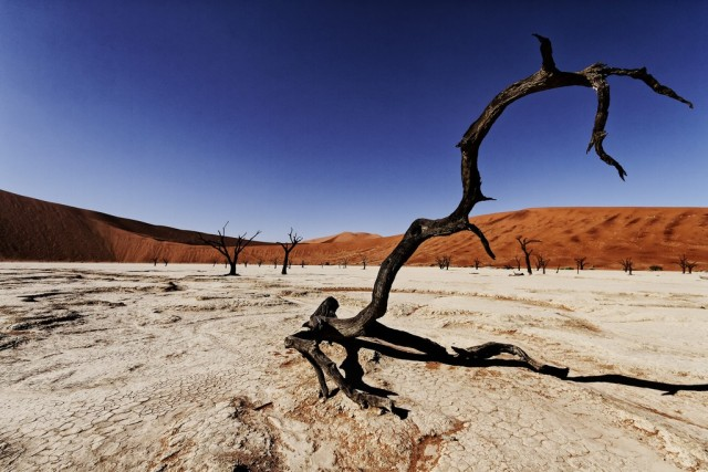 the-900-years-old-leafless-forest_5