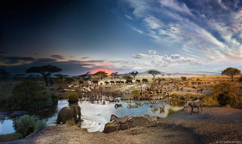 Национальный парк Серенгети, Танзания, 2015 год