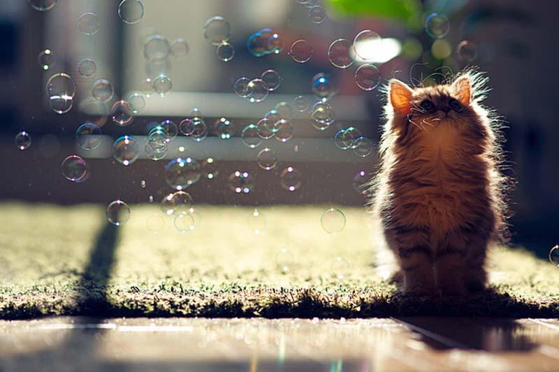 Kitten Observes Transit of Bubbles