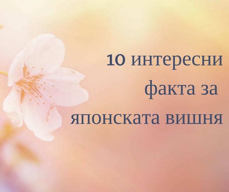 10 факта за сакура