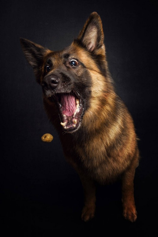 Dogs_Catching_Food_10