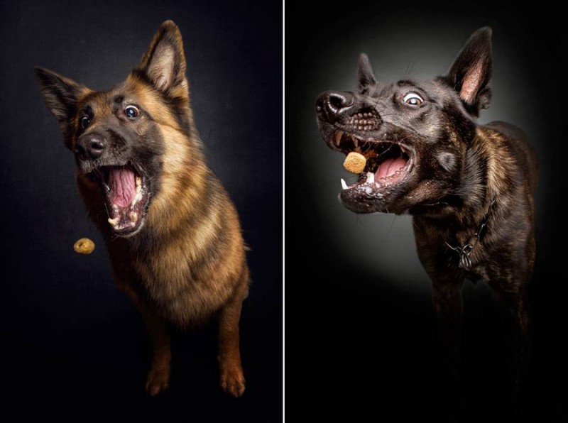 Dogs_Catching_Food_3