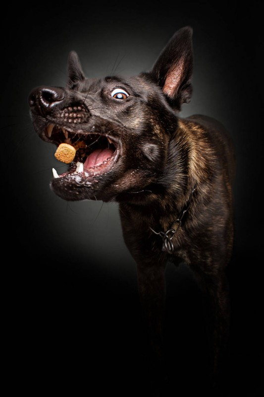 Dogs_Catching_Food_9