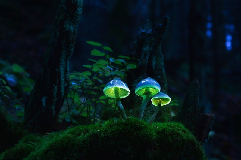 Glowing-mushrooms-01