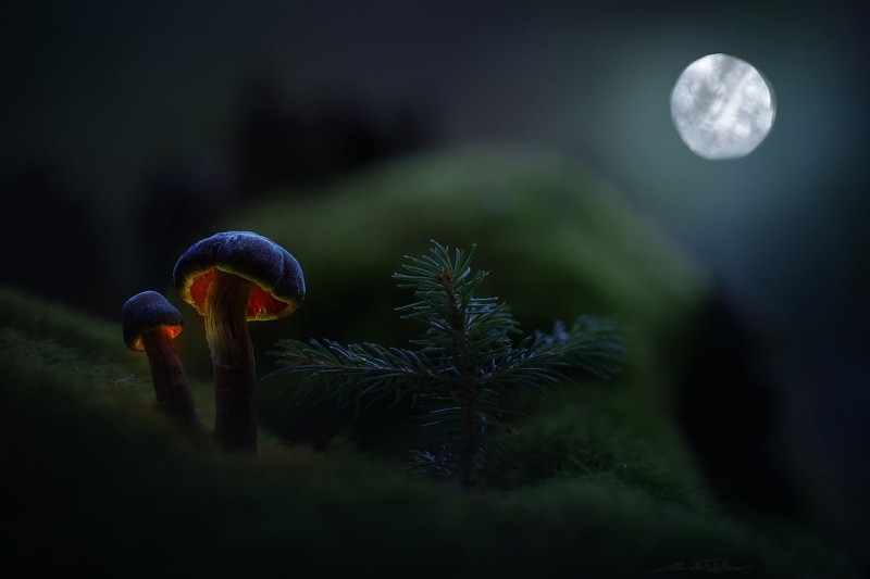 Glowing-mushrooms-02