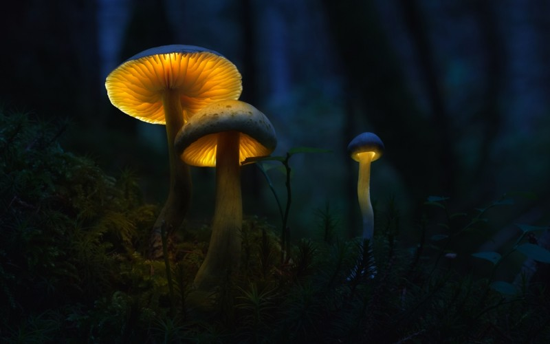 Glowing-mushrooms-04