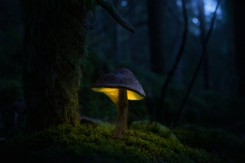 Glowing-mushrooms-05