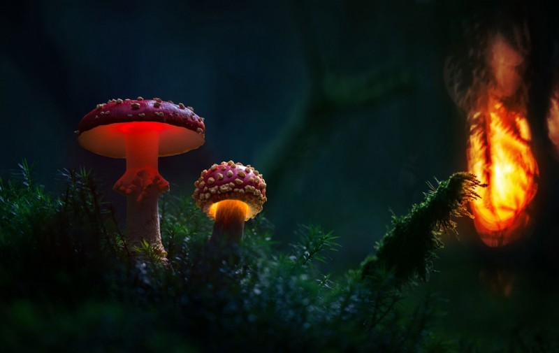 Glowing-mushrooms-10