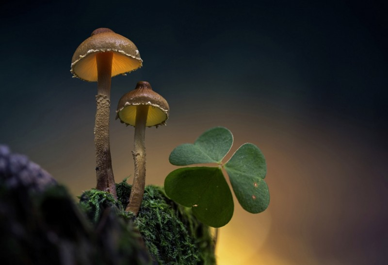Glowing-mushrooms-13