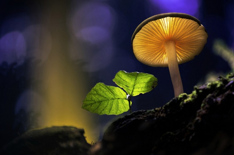 Glowing-mushrooms-16