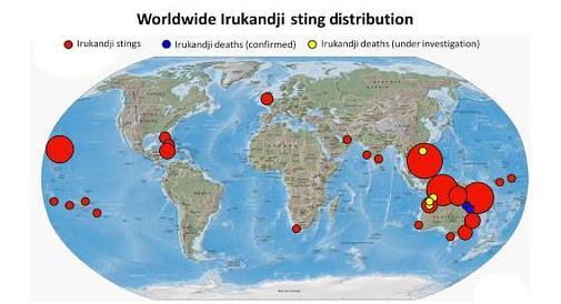 Irukandji_worldwide