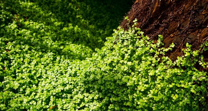 Nature_Photos_10