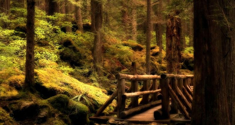Nature_Photos_25