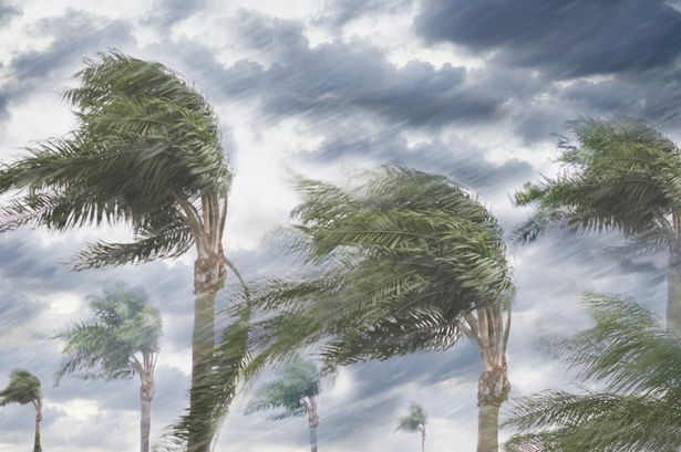 Rain-and-storm-winds-blowing-trees