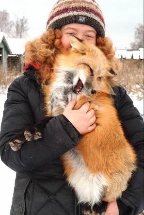 Red fox 6