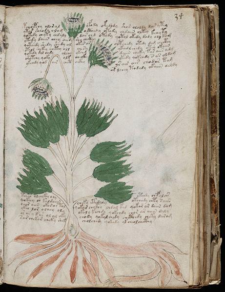 Voynich_Manuscript_2