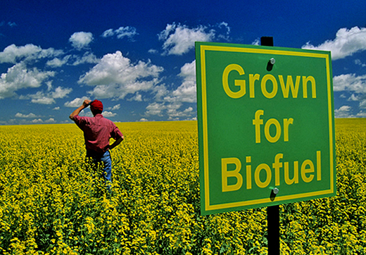 agri_for_biofuel_teaser_image