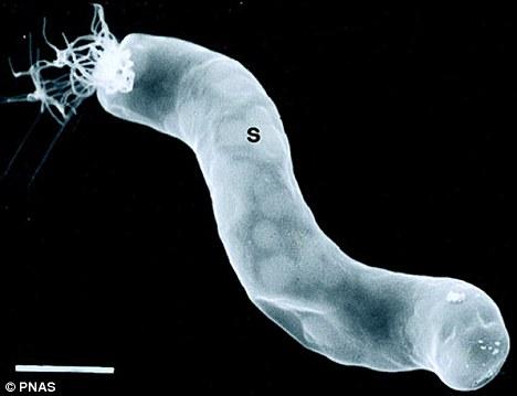 alien bacteria