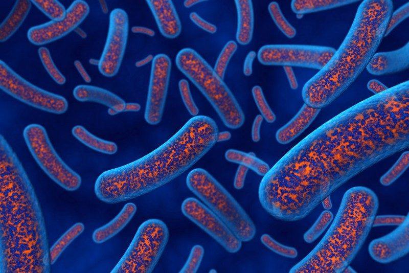 bacteria-cells