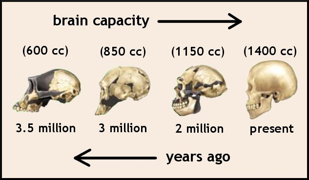 brain_evolutionjpg