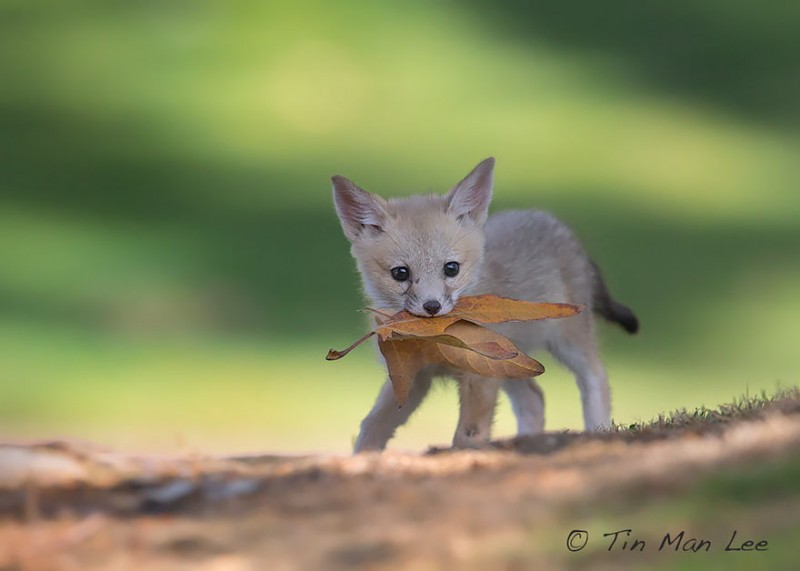 cute-baby-foxes-cubs-14-574436b62fece__880