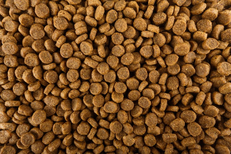 dog_food