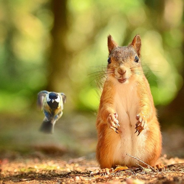 finnish-wildlife-feeding-squirrel-whisperer-konsta-punkka-231-605x605