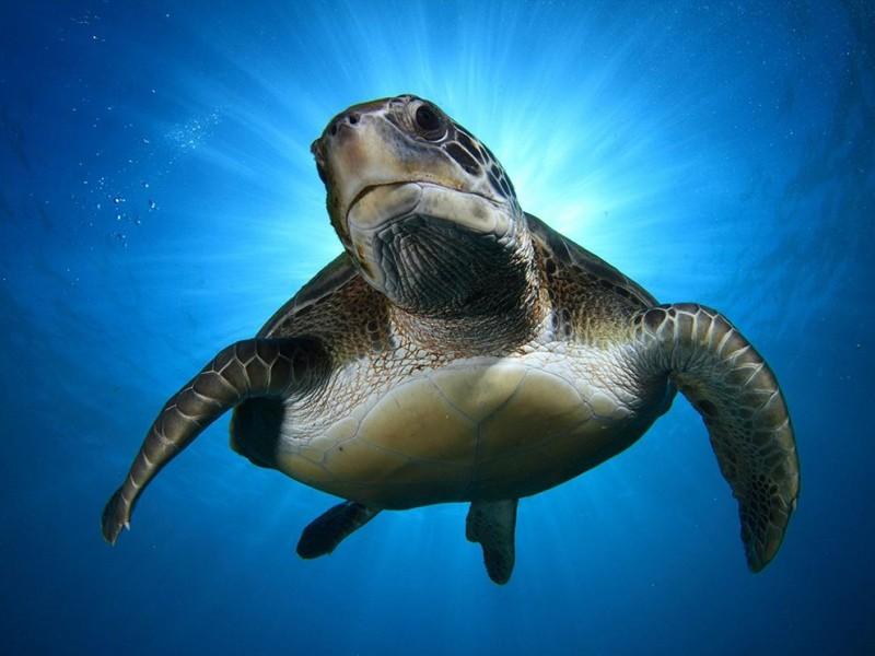 green-turtle-tenerife_84734_990x742