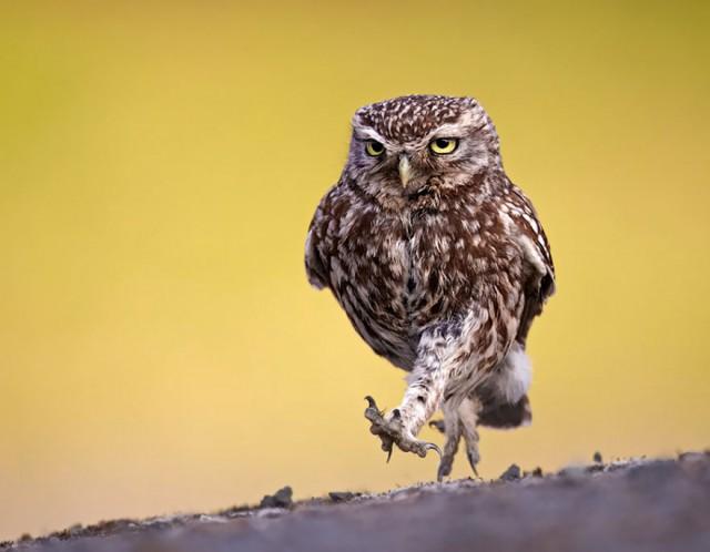 owl-photography-10__880-640x498