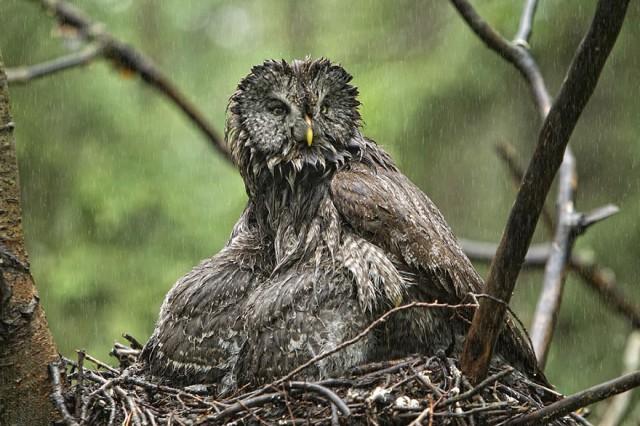 owl-photography-11__880-640x426