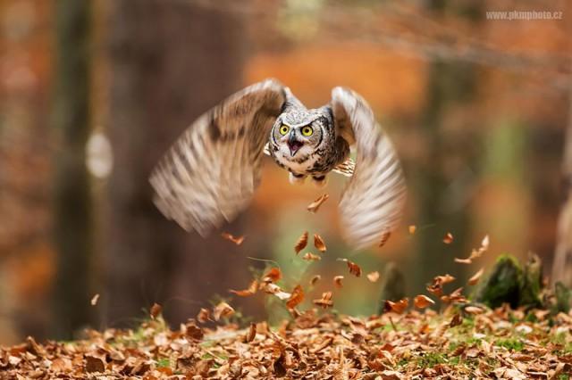 owl-photography-13__880-640x426
