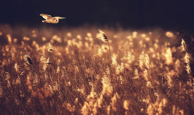 owl-photography-17__880-640x380