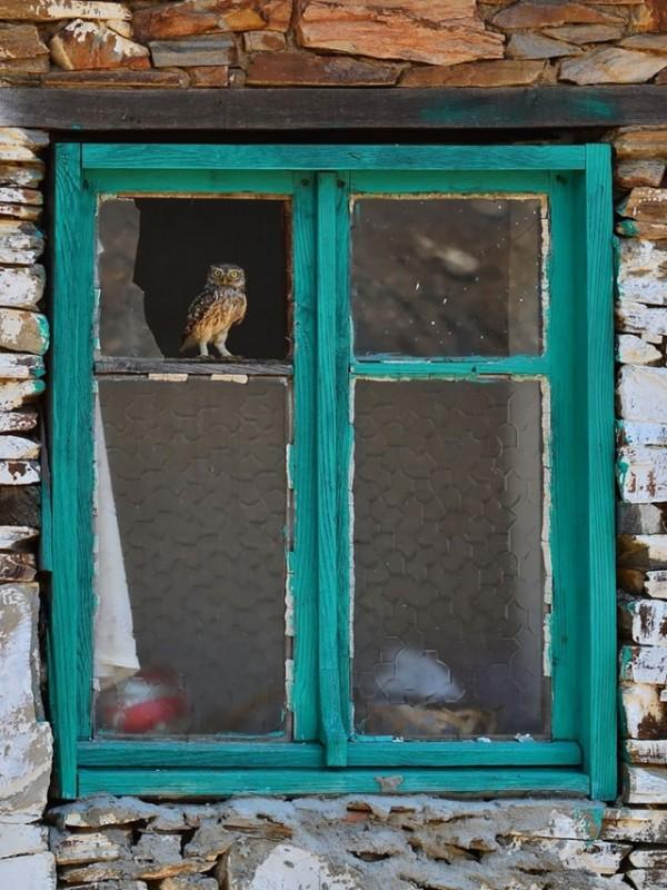owl-photography-18__880-640x853