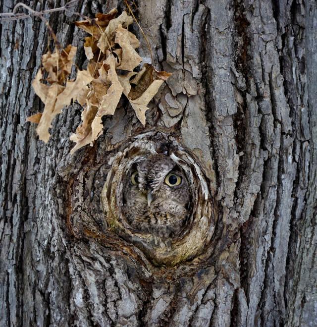 owl-photography-19__880-640x660