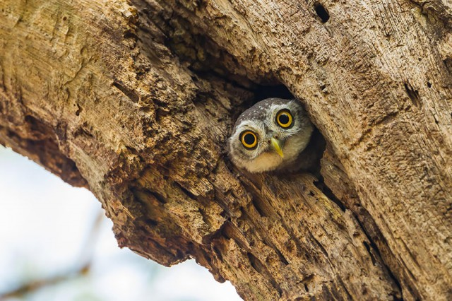 owl-photography-23__880-640x426
