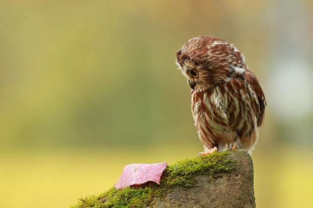 owl-photography-25__880-640x426