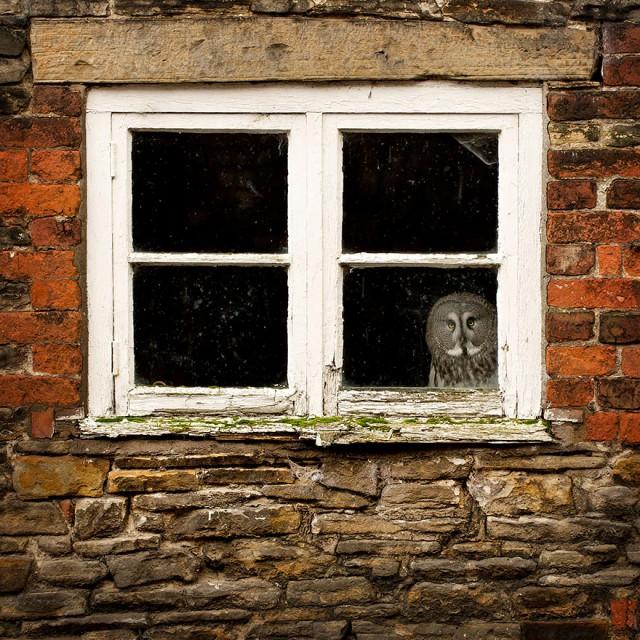 owl-photography-26__880-640x640