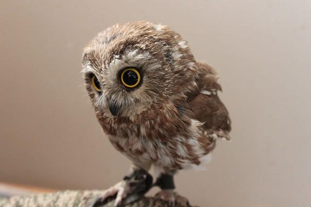 owl-photography-2__880-640x426