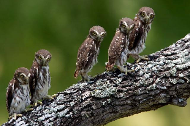owl-photography-30__880-640x426