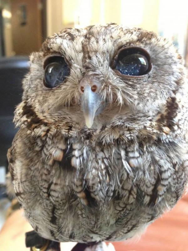 owl-photography-33__880-640x853
