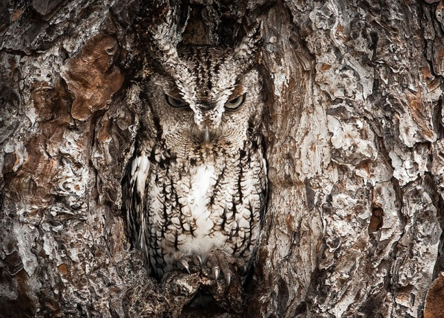 owl-photography-3__880-640x458