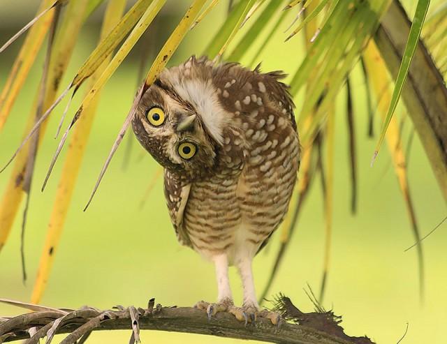 owl-photography-6__880-640x493
