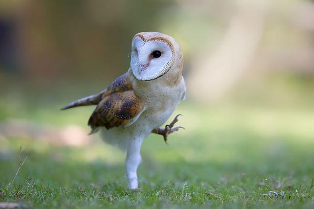 owl-photography-7__880-640x426