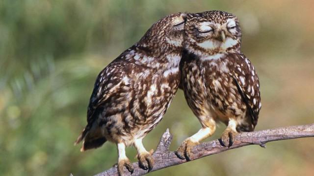 owl-photography-cute-100__880-640x360