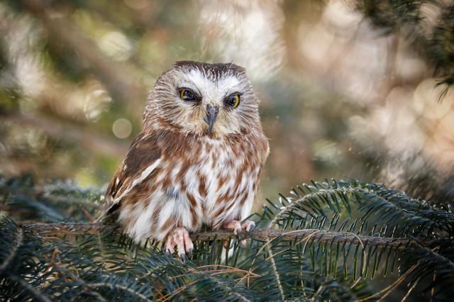 owl-photography-cute-104__880-640x426