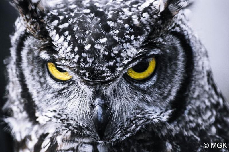 owl-photography-cute-107__880