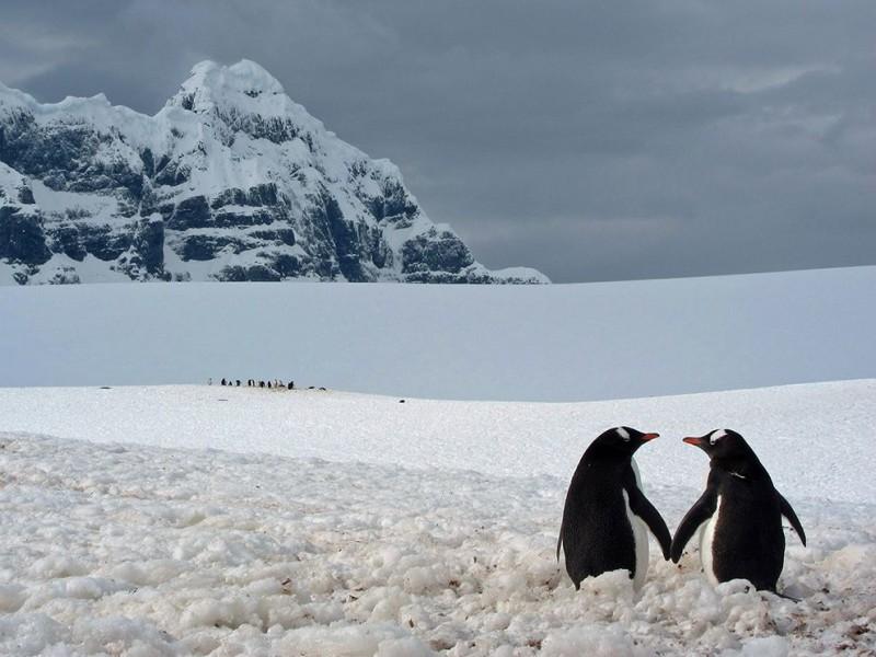 penguin-pair-point-lockroy_72970_990x742